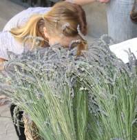 La Lavanda ~ lavender