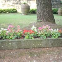 Flowers in a stone planter ~ i fiori in una fioriera di pietra