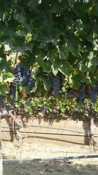 Skipstone Vines