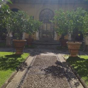 Sunshine, Shadows, Lemon Trees,Medici
